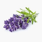 car shaped air freshener lavender fragrance