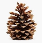 novelty car air freshener pine cone fragrance